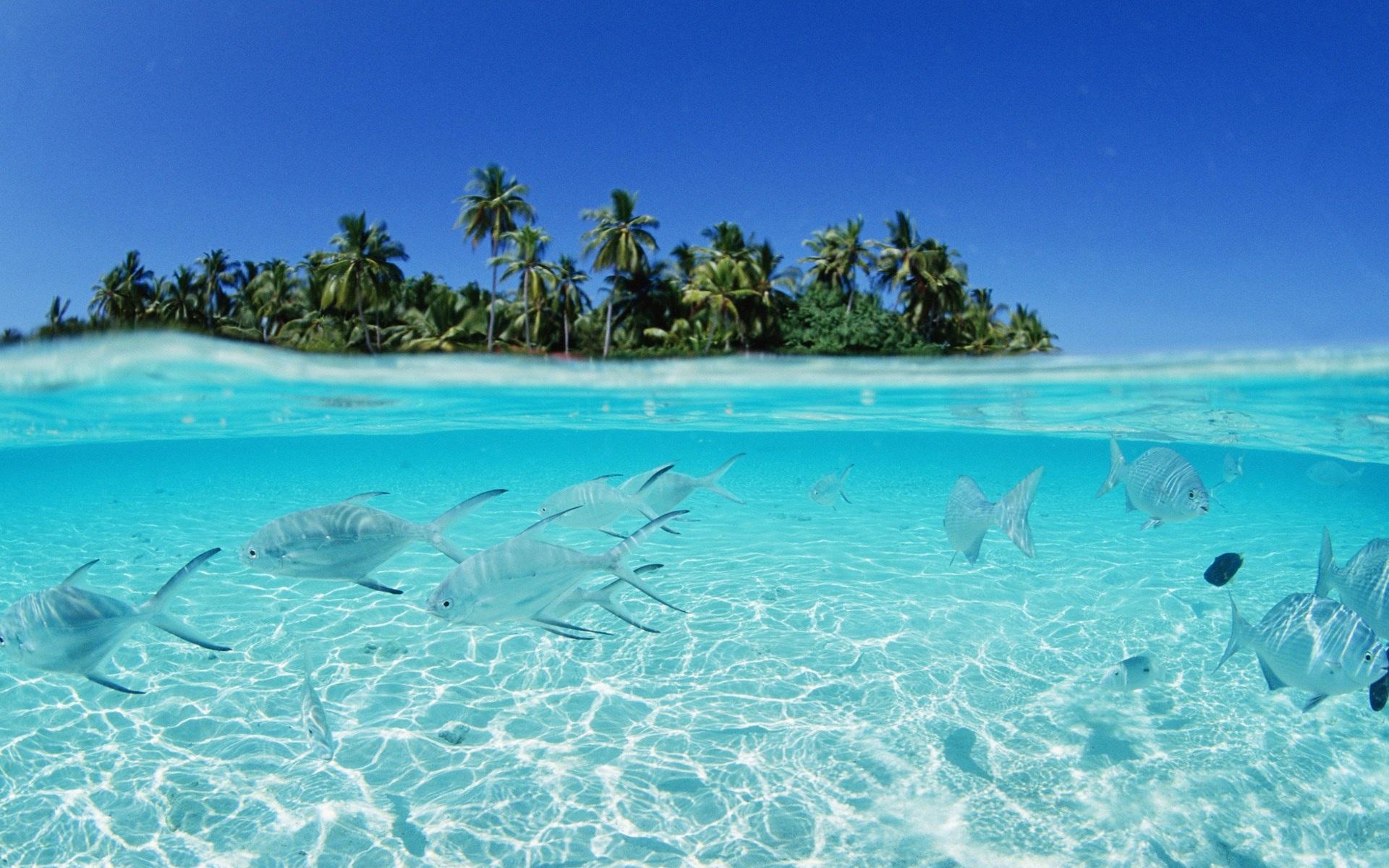 мальдивы, море, рыбки