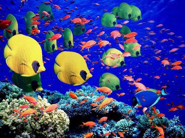 море, рыбки, дайвиг