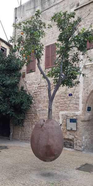 Парящее апельсиновое дерево. Старый Яффо